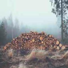 94 Imagen troncos