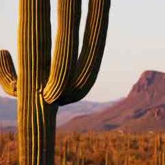 94 Respuestas imagen cactus