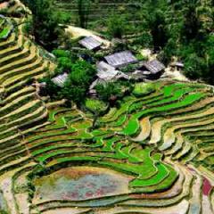 94 imagen campos de cultivo