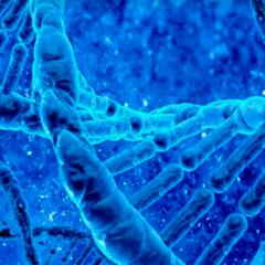 94 Respuestas imagen ADN