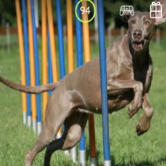 94 Respuestas imagen perro