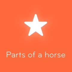 Parts of a horse 94