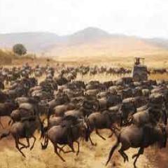 94 Respuestas imagen africa