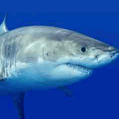 94% shark image answers