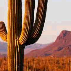 94 cactus picture answers