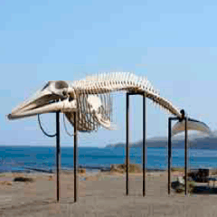 94 whale skeleton picture