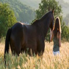 94 Respuestas imagen caballo