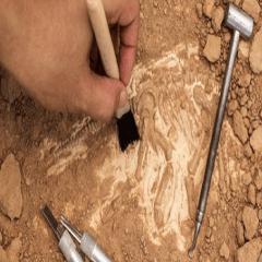 94 Respuestas imagen arqueología