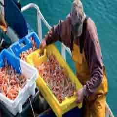 94 Respuestas imagen pescador