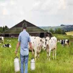 94 Respuestas imagen vacas granja - nivel 261