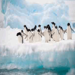 94 Respuestas imagen pingüinos