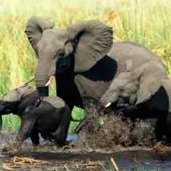 94 imagen elefantes