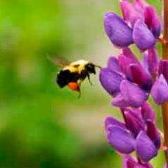 94 imagen abeja