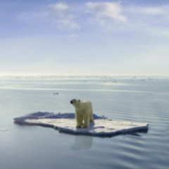94 imagen oso polar