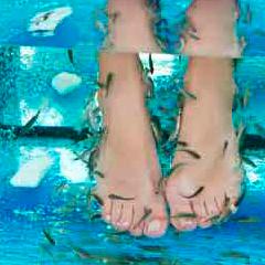 94 Respuestas imagen pies peces