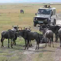 94 Respuestas imagen safari