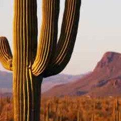 94 imagen cactus