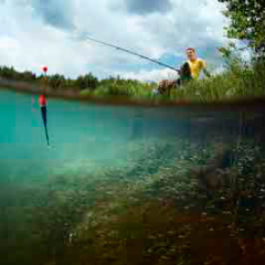 94 imagen lago