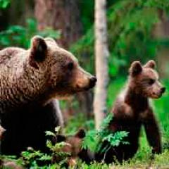 94 Respuestas imagen osos