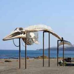94 Respuestas imagen esqueleto ballena
