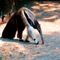 94% Anteater picture answers