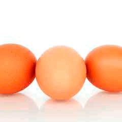 94 eggs photo