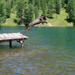 94 dog jumping into a lake picture