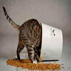 94 cat picture