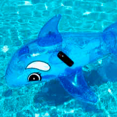 94% Pool dolphin picture answers
