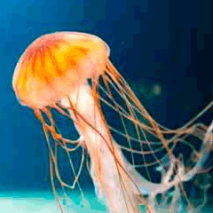 94 jellyfish picture