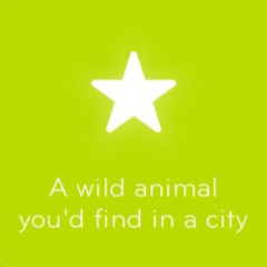 A wild animal you´d find in a city 94