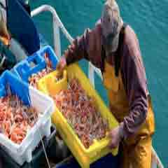 Imagen pescadores 94