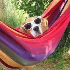 Imagen perro gafas 94