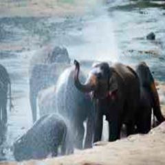 94 answers level 371 Elephant image