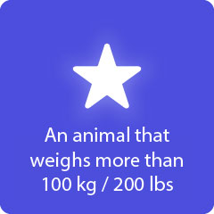 An animal that weighs more than 100kg 200lbs 94