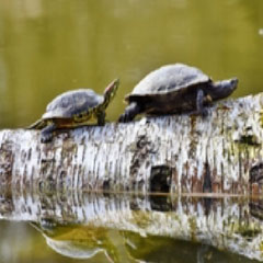 imagen tortugas 94